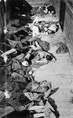 <p>Corpses lie in one of the open railcars of the Dachau death train. The Dachau death train consisted of nearly forty cars containing the bodies of between two and three thousand prisoners transported to Dachau in the last days of the war. Dachau, Germany, April 29, 1945.</p>