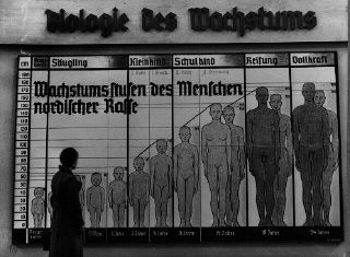 "<p>The Nazis used public displays to spread their ideas of race. The chart shown here is titled ""The Biology of Growth,"" and is labeled ""Stages of Growth for Members of the Nordic Race.""</p>"
