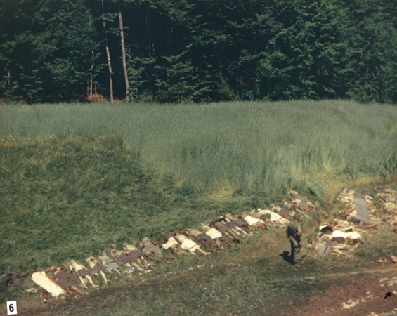 An American soldier stands among the corpses of prisoners exhumed from a mass grave in a ravine near Nammering. [LCID: 04473]