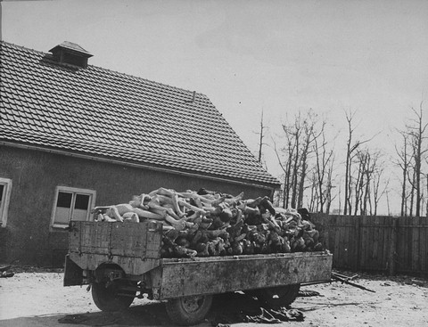 A wagon is piled high with the bodies of former prisoners in the newly liberated Buchenwald concentration camp. [LCID: 74783]