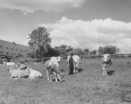 "<p>A Jewish youth on an agricultural training farm that prepared Jewish refugees for life in Palestine, sponsored by the <a href=""/narrative/5002"">Joint Distribution Committee</a>. Fuerth, Germany, June 13, 1946.</p>"