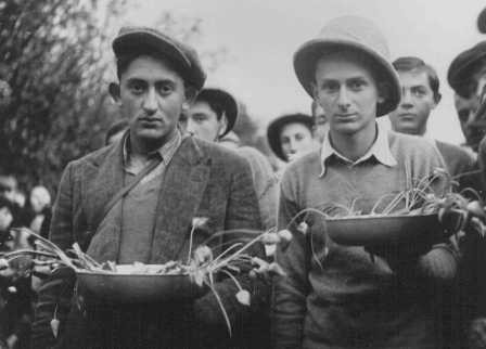 "<p>Polish Jewish refugee youth known as the ""Tehran Children,"" who arrived in Palestine via Iran, learn agricultural skills. Ayanot, Palestine, 1943.</p>"