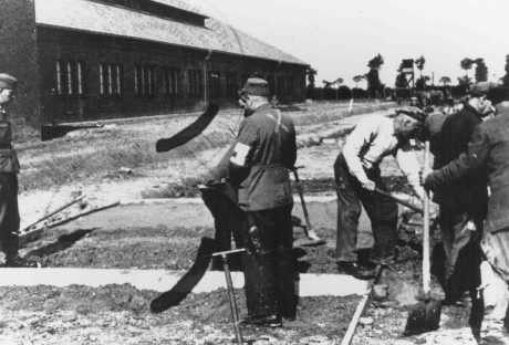 <p>Inmates of the Neuengamme concentration camp paving the street to the workshop under SS supervision. Neuengamme, Germany, 1943.</p>