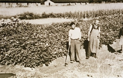 <p>Prisoners in the Gurs camp work in gardens set up by the American Friends Service Committee. This Quaker organization provided relief to prisoners at Gurs. France, ca. 1943.</p>