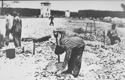 Prisoners of Sachsenhausen at forced labor.