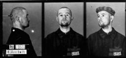 <p>Идентификационные фотографии заключенного с нетрадиционной ориентацией, который прибыл в концентрационный лагерь Освенцим 27 ноября 1941 года и был переведен в лагерь Маутхаузен 25 января 1942 года. Освенцим, Польша</p>