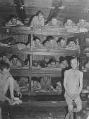 <p>Liberated prisoners demonstrate the overcrowded conditions at the Buchenwald concentration camp. Photograph taken after the liberation of the camp. Buchenwald, Germany, April 23, 1945.</p>