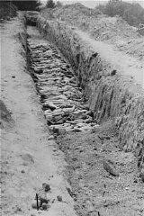 "<p>A mass grave at the <a href=""/narrative/3880/en"">Mauthausen</a> concentration camp. Photograph taken after the liberation of the camp. Mauthausen, Austria, May 10–15, 1945.</p>"