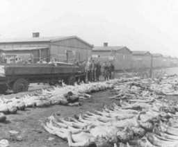 """<p>Visiting American newspaper and magazine correspondents view rows of corpses in <a href=""""/narrative/4391/en"""">Dachau</a>. Photograph during an inspection following the liberation of the camp.Dachau, Germany, May 4, 1945.</p>"""