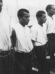 "<p><a href=""/narrative/4500"">Romani (Gypsy) prisoners</a> line up for roll call in the <a href=""/narrative/4391"">Dachau</a> concentration camp. Germany, June 20, 1938.</p>"