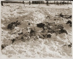 <p>Bodies of US soldiers killed by Waffen SS troops during the Malmedy Massacre on December 17, 1944. Photograph taken in January 1945. </p>