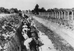 Prisoners at forced labor in the Neuengamme concentration camp. [LCID: 6031]