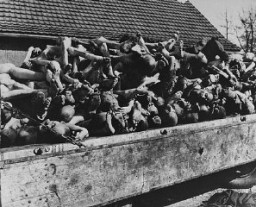 "<p>A wagon is piled with the bodies of victims of the <a href=""/narrative/3956/en"">Buchenwald</a> concentration camp. Photograph taken following the liberation of the camp. The <a href=""/narrative/7812/en"">6th Armored Division</a> overran the camp on April 11, 1945. Buchenwald, Germany, April 11–May 1945.</p>"
