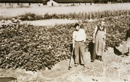 Détenus au camp de Gurs travaillant au jardin potager mis en place par l'American Friends Service Committee (le Secours Quaker ...