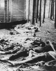 "<p>Corpses found by US soldiers after the liberation of the Gunskirchen camp, a subcamp of the <a href=""/narrative/3880/en"">Mauthausen</a> concentration camp. Austria, after May 5, 1945.</p>"