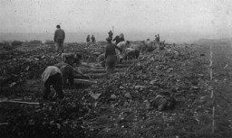 <p>German civilians conscripted from nearby towns dig graves for some of the victims of the Ohrdruf camp. Ohrdruf, Germany, April 1945.</p>