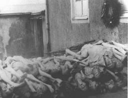 Corps entassés derrière le four crématoire à Buchenwald.
