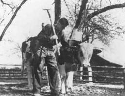Jeune juif dans une ferme de formation agricole, parrainée par le Joint, qui préparait les réfugiés juifs pour la vie en Palestine.