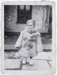 """<p>Portrait of three-year-old Estera Horn wrapped in a fur coat. Chelm, Poland, ca. 1940.</p> <p>Estera was born in January 1937. Her father was killed soon after the <a href=""""/narrative/2103"""">Germans invaded Poland</a>. Estera and her mother, Perla Horn, were forced into the ghetto in Chelm. At the end of 1942, during the liquidation of the ghetto, Perla and Estera escaped from the ghetto. They hid in nearby villages. In late 1943, Perla asked a family in Plawnice to take care of Estera. Perla tried to hide with a group of Jews in the nearby forest, but they were discovered by Germans and killed. In the spring of 1944, the family began looking for a new home for Estera (who had been given the name Marysia). She was placed in Warsaw, and eventually transferred to an orphanage in Krakow.</p>"""
