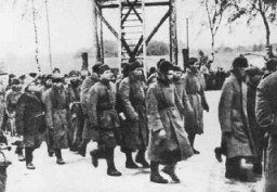 <p>Soviet prisoners of war arrive at the Majdanek camp. Poland, between October 1941 and April 1944.</p>